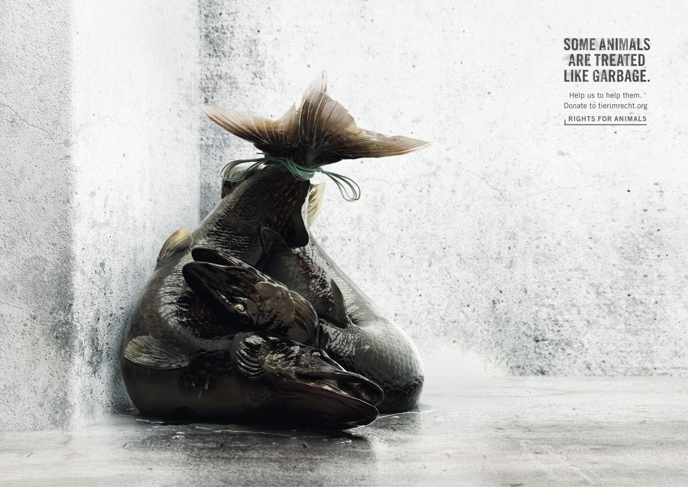Foundation Tier im Recht Print Ad - Pike