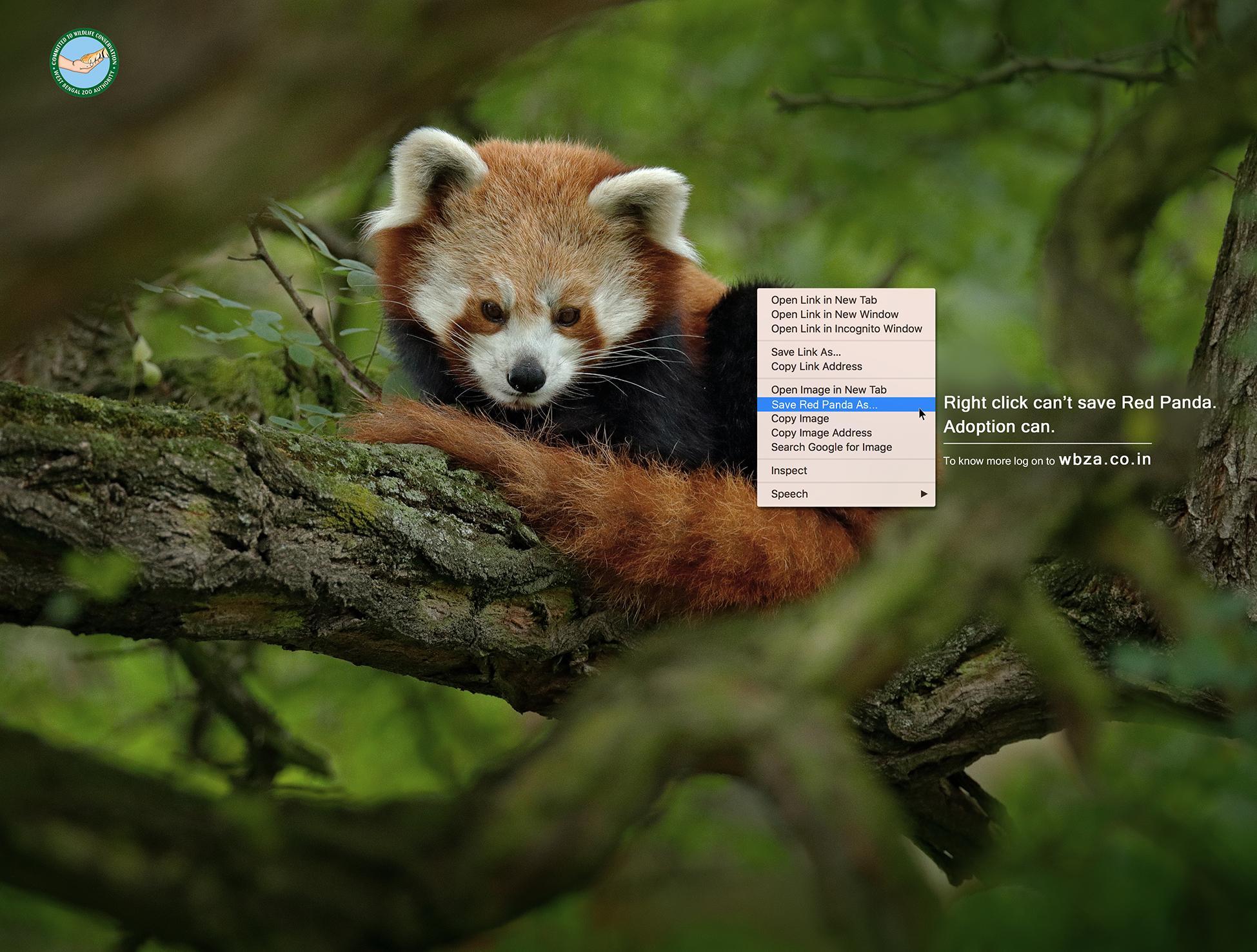 WBZA Print Ad - Red Panda