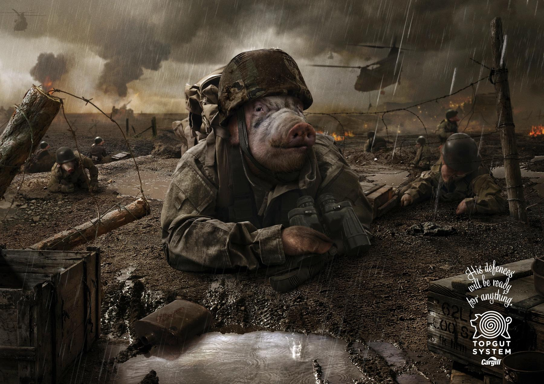 Cargill Print Ad -  Soldiers Pigs