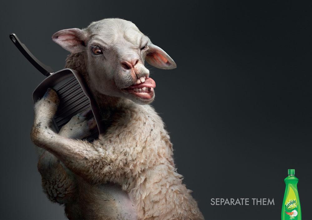 Sunlight Print Ad -  Lamb