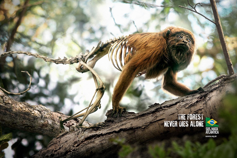 SOS Mata Atlântica Print Ad - Monkey