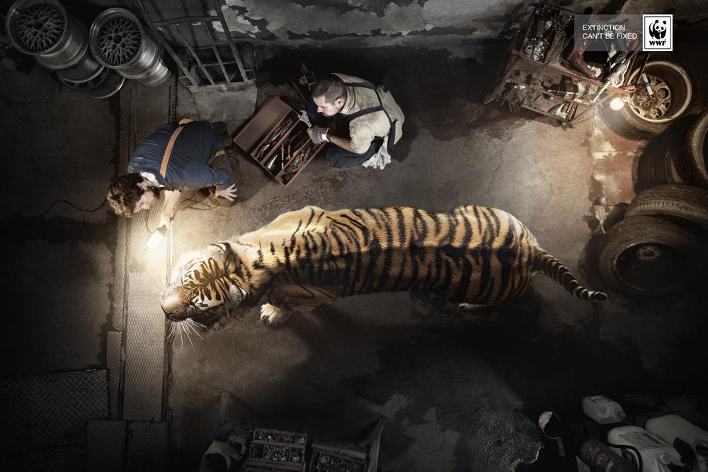 WWF Print Ad -  Extinction can't be fixed, Tiger