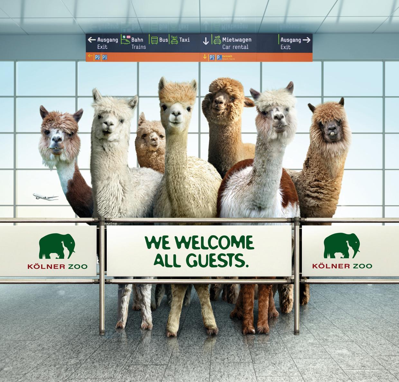 Zoo Cologne Outdoor Ad -  Alpaca