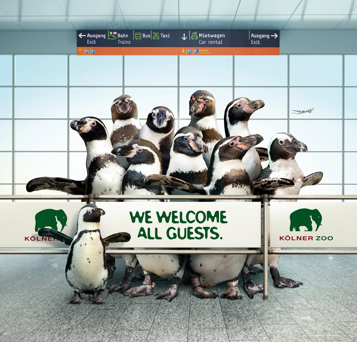 Zoo Cologne Outdoor Ad -  Penguit