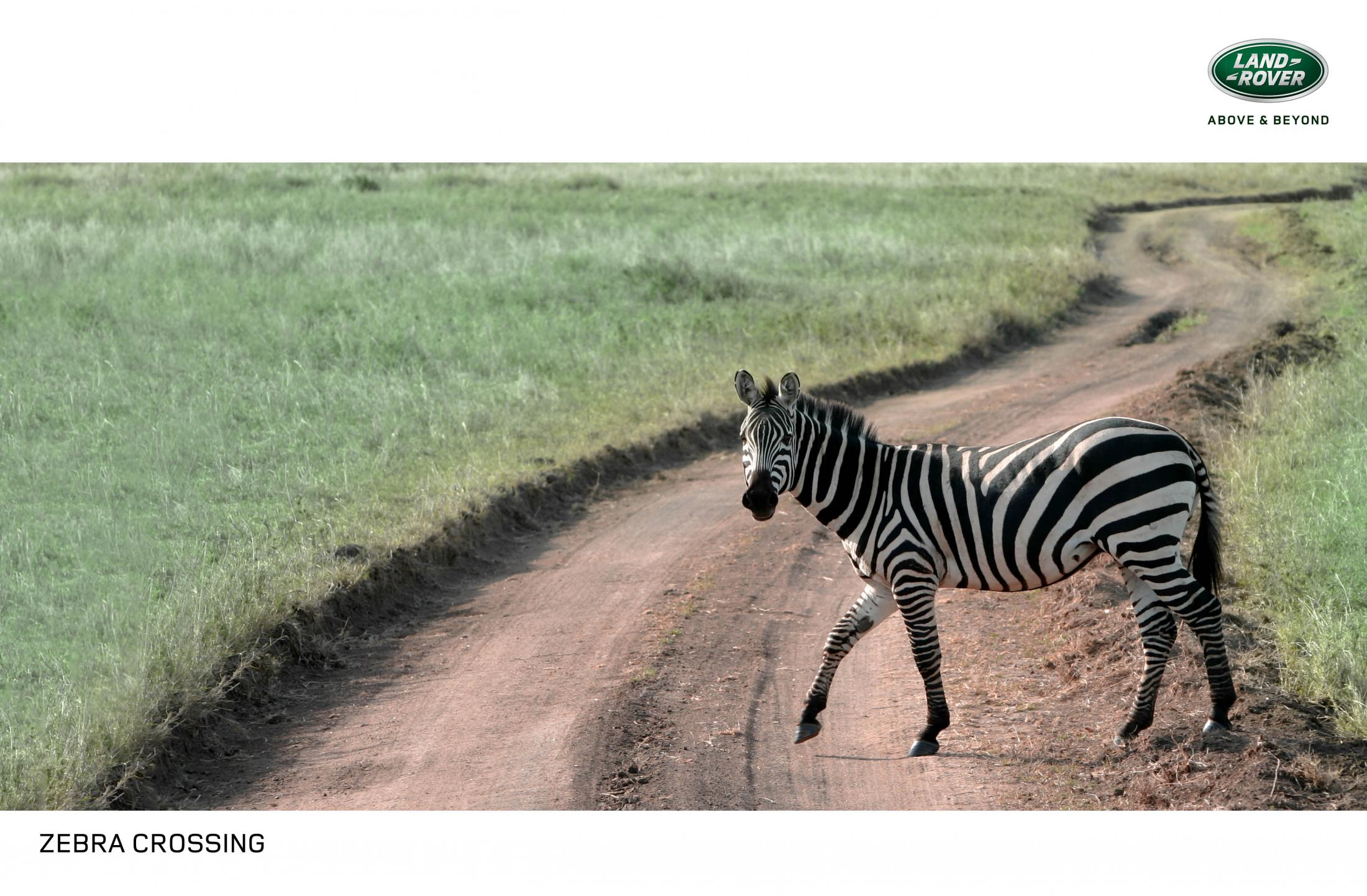 Land Rover Print Ad - Zebra Crossing