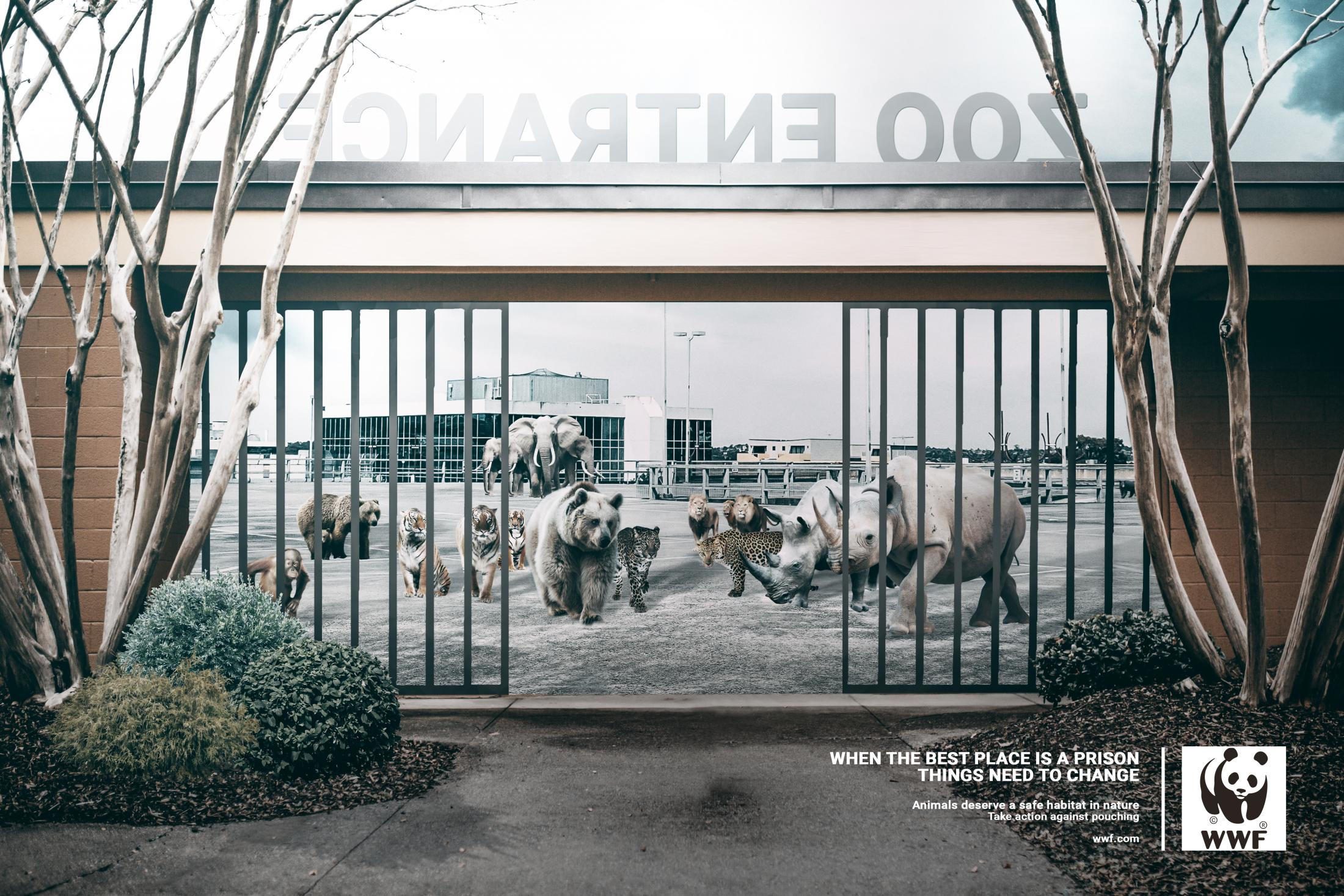 WWF Print Ad - Best in Prison