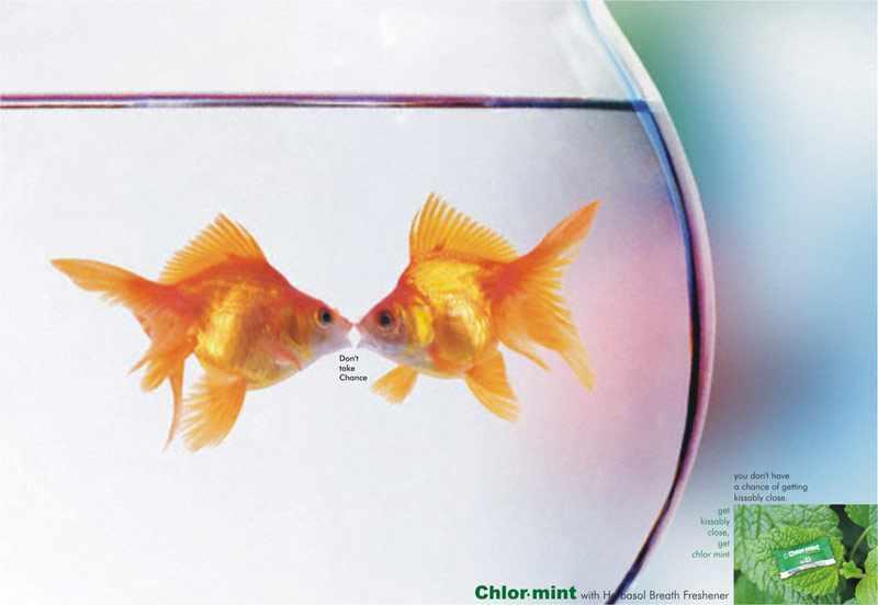 Chlor Mint- Get Closer