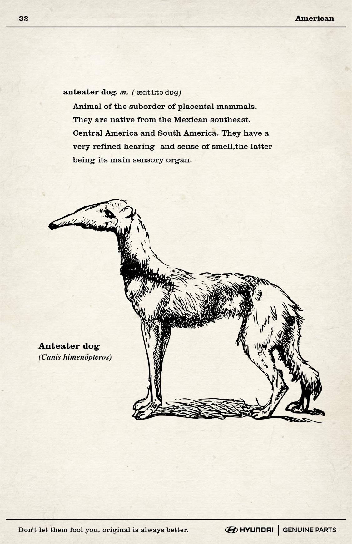 Hyundai Print Ad - Anteater Dog
