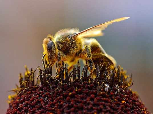 Calling all creatives to help save the bees killed by mobiles